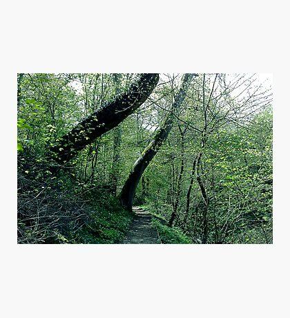 Danes Dyke - Bridlington Photographic Print
