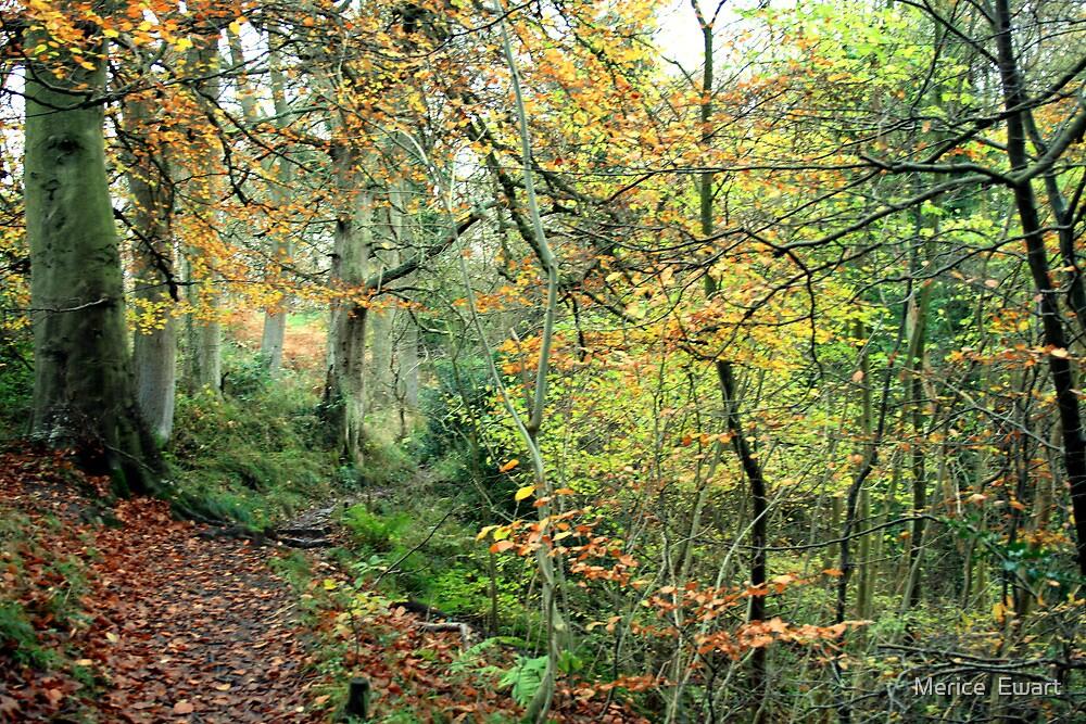 Snaiton Forest - Falling Foss North Yorkshire by Merice Ewart Marshall - LFA