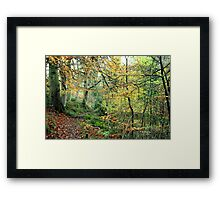 Snaiton Forest - Falling Foss North Yorkshire Framed Print