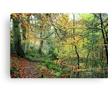 Snaiton Forest - Falling Foss North Yorkshire Canvas Print