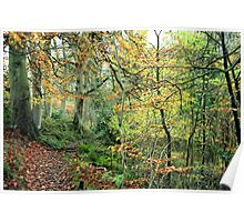 Snaiton Forest - Falling Foss North Yorkshire Poster