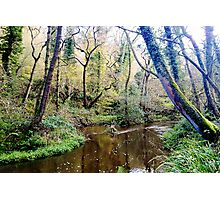 Forge Valley Hackness - North Yorkshire Photographic Print