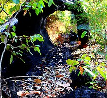 Log On Bibbulmun Track by purpleneil59