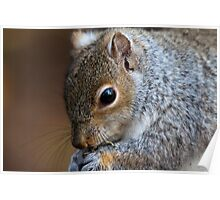 Squirrel faced Poster