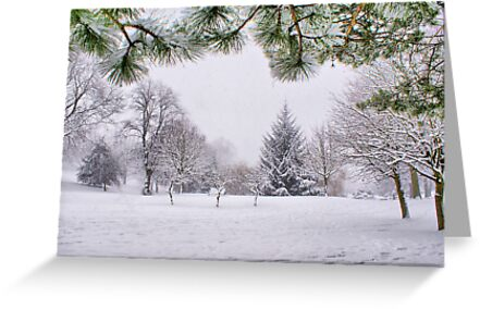 White And Wintery At Peel Park, Bradford by Sandra Cockayne