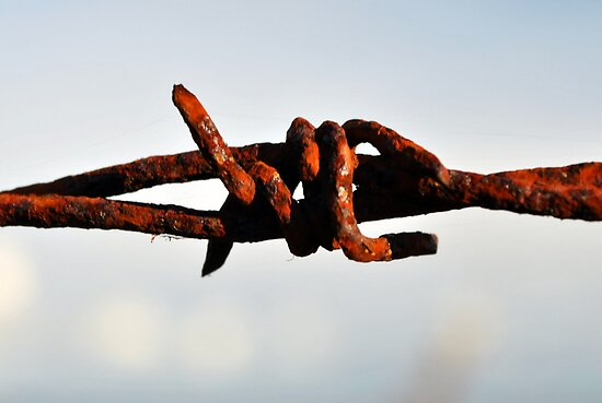 Rusty wire by Alan Reid