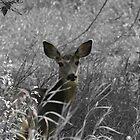 bambi by bapix