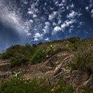 High View,Walk of Love,Manarola,Italy. by Davide Ferrari