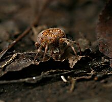 itcey witcey spider... by bapix