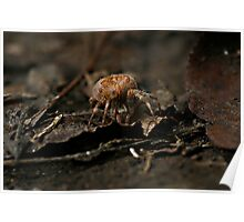 itcey witcey spider... Poster