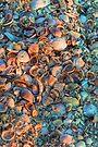 Shell Beach by Bill Wetmore
