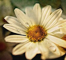 Vintage Daisy by KatMagic Photography