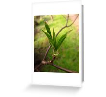 Little Spring Sprout Greeting Card