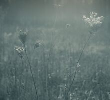 A Walk Through A Field Of Memories Past by MLabuda