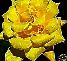 Yellow Rose Glow by Doug Greenwald