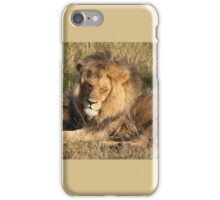 Lion laying down iPhone Case/Skin