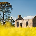 """"""" Wright's Homestead """"  ... and Canola crop  by Malcolm Heberle"""