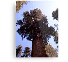 General Sherman sequoia Metal Print