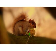 Bird Food Thief ! Photographic Print