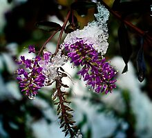 A Touch of Brrrrr.... by Kelvin Hughes