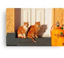 Cats sunbathing Canvas Print
