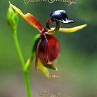 Flying Duck Orchid, Gippsland - Greetings by Bev Pascoe