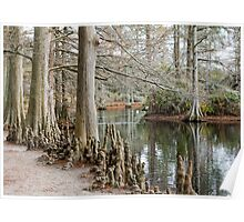 Winter Cypress Trees Poster