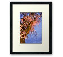 Night Blossoms Framed Print