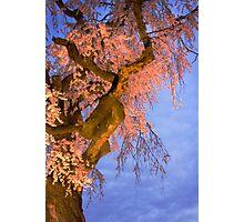 Night Blossoms Photographic Print