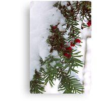 Snowy Berries Canvas Print
