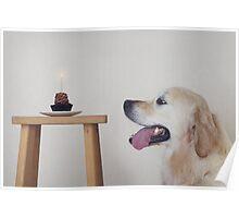 Happy Birthday Doggy Poster
