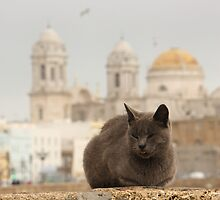 a homeless cat in cadiz by Timothy Adams