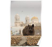 a homeless cat in cadiz Poster
