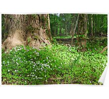 Patch of Sunshine - New Jersey Woods Poster