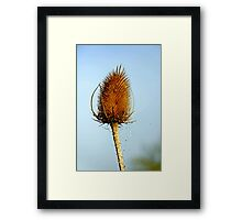 Teasel Laced with Morning Dew Framed Print