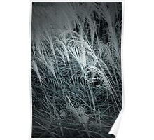 Tall Grass in the Wind Poster
