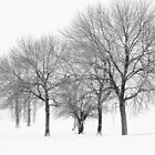 Stormy Winter Trees - Lake Michigan by jonnygatt
