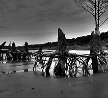 Low Tide by Shane Jones