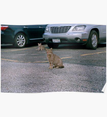 Yard Cats Poster