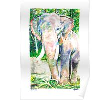 For Weezie (Elephant) Poster