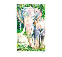 For Weezie (Elephant) Photographic Print