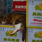 The Hong Kong Cat by Sara Friedman