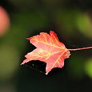 A Fall Leaf by Jeff Ore