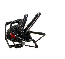 Black Widow by Cameron Hampton