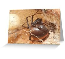 redback spider Greeting Card