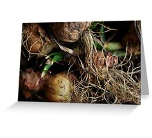 roots Greeting Card