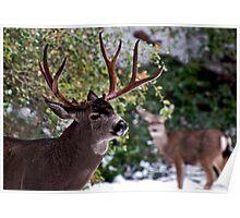 Yosemite Buck Poster