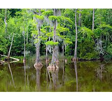 Cypress Paradise Photographic Print