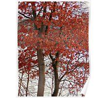 Orange Leaves on a Tree Poster