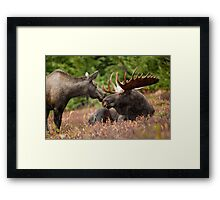 Cool Moose Framed Print
